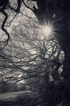 https://flic.kr/p/GDMBJP | Trees study