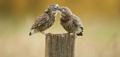 20 Adorable Couples That Prove Love Exists In The Animal Kingdom Too Bing Wallpaper, Big Bisous, Romantic Animals, Prove Love, Beaux Couples, Burrowing Owl, Fallow Deer, Super Cute Animals, Big Photo
