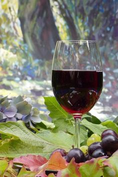 Red wine is a wonderful complement to a meal. Can diabetics enjoy red wine without a detrimental effect on their health? The answer to this question is yes! Best Red Wine, Dry Red Wine, Red Wine Health Benefits, Wine And Diabetes, Fruity Wine, Diabetic Drinks, Diabetic Recipes, Pinot Noir Wine, Wine Vineyards