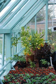 Greenhouse by Alitex UK, via Flickr