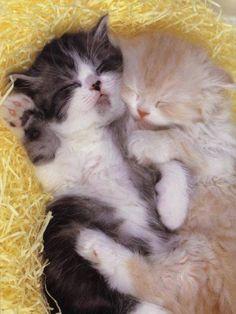 Snuggles !