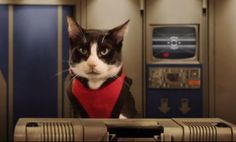 "For all you Trek fans, ""Cats In Space""."