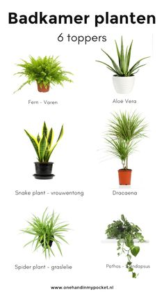 Plants in the bathroom? These are 6 toppers - One Hand in my Pocket - Plants in the bathroom? These are 6 toppers – One Hand in my Pocket - Bathroom Plants, Bathroom Toilets, Bathroom Flowers, Bathrooms, Modern Bedroom Design, Bathroom Interior Design, Wc Retro, Spider Plants, Snake Plant