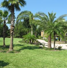 GreenFlex Landscaping offers commercial and home lawn maintenance and irrigation programs to care for custom designed landscaping. Pruning Plants, Plant Pests, Landscape Maintenance, Lawn Maintenance, Commercial Landscape Design, Ormond Beach, Lawn And Landscape, Palm Coast, Weed Control