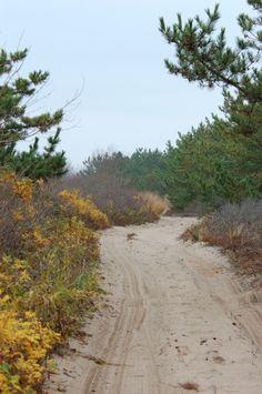 east beach charlestown ri | Eye Dull Musings: East Beach, Charlestown, RI