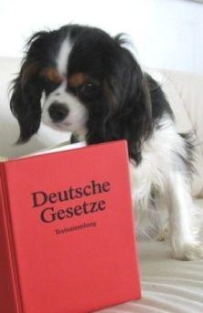Rechtsanwalt für Tierrecht Tieranwalt Ackenheil Tierrechtskanzlei bundesweite Rechtsberatung #Hund #Pferd #Tierarzt http://www.tierrecht-anwalt.de