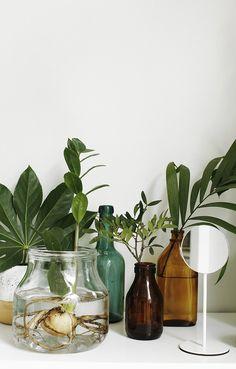 Rostliny jako dekorace - prostřednictvím cocolapinedesign.com