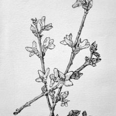 Tableau dessin encre de chine arbre lilas forsythia en - Dessin de lilas ...