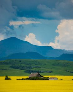 Canola Fields Photo, Alberta Photograph Canada Photography Yellow Flowers Spring Landscape Canadian Rockies Canola Fields, Alberta, Canada This image. Nature Landscape, Spring Landscape, Landscape Edging, Landscape Photos, Landscape Paintings, Landscape Photography, Nature Photography, Photography Flowers, Scenic Photography