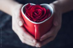 Red Rose in a Heart-Shaped Cup by Helen Sotiriadis - Stocksy United Beautiful Rose Flowers, Flowers For You, Red Flowers, Romantic Roses, Coffee Heart, Coffee Love, Heart Wallpaper, Heart Art, My Flower