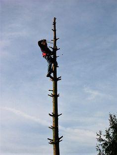 Baum fällen in Stücken Utility Pole