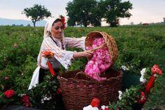 Празник на Розата в град Казанлък!   Дата: 03.06.2017  Престой: Еднодневна  Цена: 39 лв.
