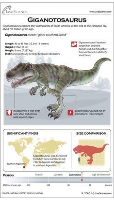 Giganotosaurus was one of the largest meat-eating dinosaurs — not as big as Spinosaurus, but larger than Tyrannosaurus rex. Dinosaur Facts, Dinosaur Fossils, Dinosaur Life, Jurassic World Park, Prehistoric Creatures, Prehistoric Dinosaurs, Extinct Animals, Animal Facts, Fauna