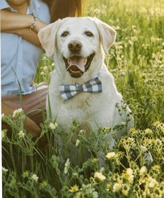 Items similar to Blue Check Plaid Bow Tie and Collar for Pets on Etsy Bow Ties, Labrador Retriever, Dog Cat, Pets, Animals, Beautiful, Vintage, Labrador Retrievers, Animales