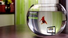 Howard the Fish - Find your perfect Home - A short video about Howard and Candy, and the journey from Bag, to Bowl, to Tank!  #Goldfish #Tank #GoldfishBowl #Fishtank #Aquarium #Fish #Youtube #EstateAgent #Advert