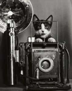 'Tiddles, the little known cat photographer...' ≧^◡^≦