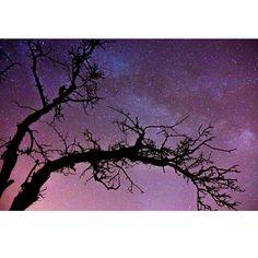 #mörschwil #by #night #milkyway #sky #night #stars #tree #longexposure #switzerland #countryside #sony #nex7 #astrophotography #rokinoncontest #FasterT