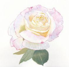 Peace Rose Handmade Watercolour Cards a set of 4 | Etsy Watercolor Rose, Watercolor Cards, Peace Rose, Original Art, Original Paintings, Cheer You Up, English Roses, Greeting Cards Handmade, Note Cards