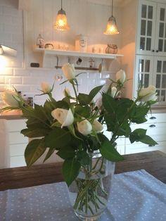 Roses ✔️ By @villatverrteigen