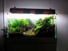 """""""Mossy tank I really like the simplicity of moss tanks. They are easy to maintain, and the results are stunning. Great for shrimps and other small fauna. I could not find much..."""