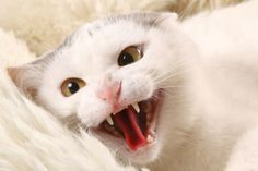 8 ways to tell if your cat is in pain