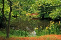 Mytoi(small Japanese Garden,)Chappaquiddick Island in Martha's Vineyard- Visit Massachusetts Small Ponds, Martha's Vineyard, Garden Features, Travel And Tourism, In Boston, Massachusetts, Day Trips, State Parks, Night Life