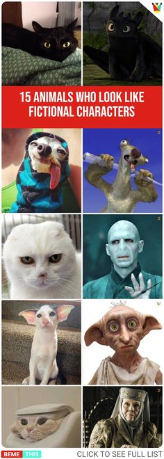 15 Cool Animals Who Look like Famous Fictional Characters #funnypictures #funnypic #bemethis #disney #animals