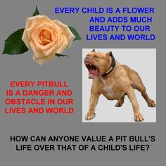 Why Do Pit Bulls Bite More Than Other Dogs