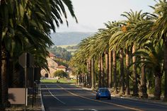 Palm Drive is the main entrance to the Stanford campus, which is an awe-inspiring 8,180 acres, the largest contiguous college campus in America.