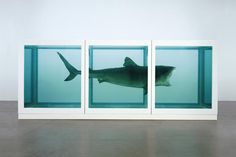 The Impossibility of Death in the Mind of Someone Living, by Damien Hirst