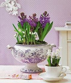 Nancy's Daily Dish: Hyacinths to Feed Thy Soul Great idea