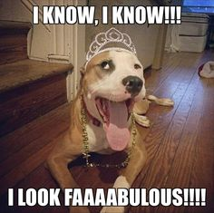 Funny Animal Picture Dump 26 Pics - Funny Dog Quotes - Funny Animal Picture Dump 26 Pics The post Funny Animal Picture Dump 26 Pics appeared first on Gag Dad. Funny Dog Memes, Funny Animal Memes, Funny Animal Pictures, Cute Funny Animals, Funny Cute, Funny Dogs, Memes Humor, Funny Dog Sayings, Hilarious Pictures