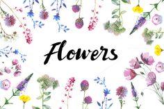 Wild Flowers watercolor by MyStocks on @creativemarket