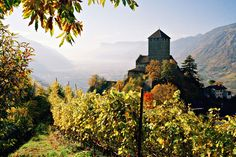 Adige Valley (Italy) - Photo: Corbis - South Tyrol, and on Italian soil, is the Adige Valley with its endless rows of vines. An extremely beautiful in autumn landscape where rural villages are mixed with ancient fortresses overlooking the valley, as the Castel Tirolo (pictured).