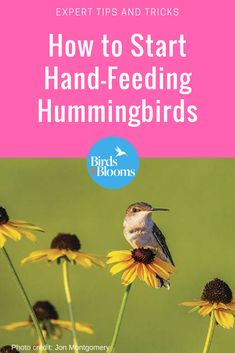 Have you ever wanted to try hand-feeding hummingbirds? Here's how to do it (safely)! Diy Bird Feeder, Humming Bird Feeders, Humming Birds, How To Attract Hummingbirds, How To Attract Birds, Leicester, Hummingbird Plants, Hummingbird Nectar, Bird House Kits