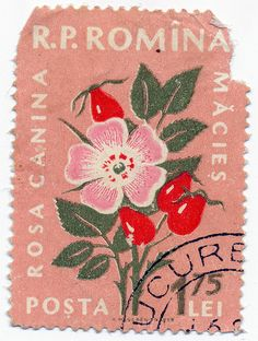 Postage Stamp - I used this stamp (in much better shape) as part of a tiny handmade book featuring all the stamps I could find with the 'Dog Rose' on them. Art Postal, Posca Art, Illustration Art, Illustrations, Photocollage, Vintage Stamps, Old Stamps, Vintage Labels, Art Graphique