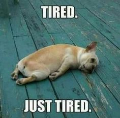 Are you assuming that your body is feeling tiredness or laziness and searching for a tired memes for fun? Here we have funny tired memes that will help you out when you cannot say the words. Funny Dogs, Funny Animals, Cute Animals, Tired Animals, Animal Memes, Anime Mexico, Dog Memes, Funny Memes, Dog Humor