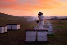 The problem with healthy sweeteners Real Honey, Buy Honey, Backyard Beekeeping, Energy Boosters, Bee Pollen, Seasonal Allergies, Honey Recipes, Natural Sugar, Bee Keeping