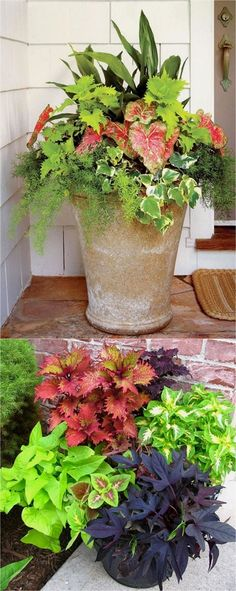 Showy, colorful and easy care shade plants and container gardens with vibrant foliage and flowers. 30+ designer plant lists to create gorgeous gardens with shade loving plants ! - A Piece Of Rainbow #ContainerGarden