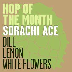 Hop of the Month: Sorachi Ace / The Mash