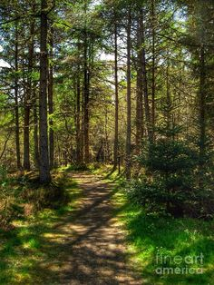 The Spey Valley Photograph - Abernethy Pinewood Forest 2 by Joan-Violet Stretch