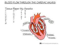 Cardiac blood flow nursing mnemonics see more http www nursebuff