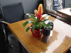 Potted Vriesea - Bar in Amsterdam - Photo by Luisella Rosa http://unpiccologiardino.blogspot.it/