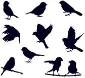Bird_on_branch : bird silhouettes Vector