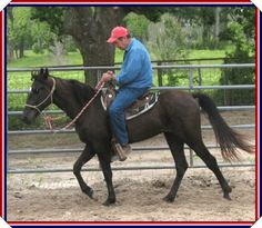 SOLD - PUSHING AWESOME #20501185 - black 15.1 hand Tennessee Walking Horse filly with a star, by Wired To Be Awesome x Happy Petalpusher JH. Experienced beginner horse, excellent broodmare prospect. Foaled 06/21/2005. Priced at $2,500 US funds. Horse is located in Texas. Overseas Transport can be arranged.  http://www.mcdodifarms.com/PushingAwesome.htm?Adventures