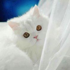 Fofura branca