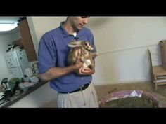 Want a Pet Rabbit? Watch this video to learn what it takes to care for a rabbit.
