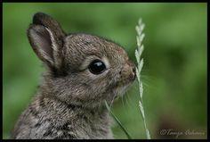 Bunny by Tanja Askani by Realm of Sleep, via Flickr