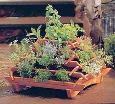 A simple idea for a small footprint herb garden. Called a Pyramid Tiered Planter. Container Herb Garden, Garden Planter Boxes, Garden Pots, Vegetable Garden, Herbs Garden, Planter Ideas, Tiered Planter, Tiered Garden, Vertical Planter
