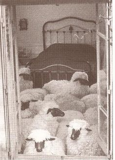 Moutons by François-Xavier Lalanne. 1970 - Olivier Lussac